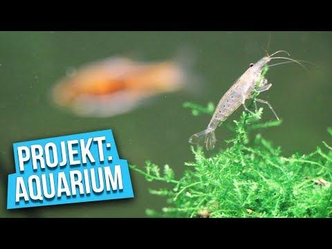Ein verdientes UPGRADE! - Projekt: Aquarium