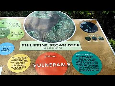 Visitation at Philippine Eagle Foundation in Davao