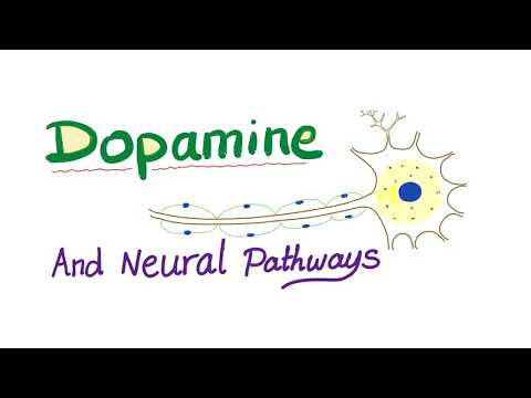Dopamine and Neural Pathways