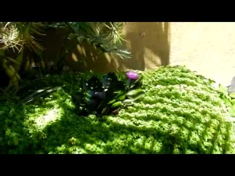 Jard n hidroponico con nen far youtube - Jardin hidroponico ...