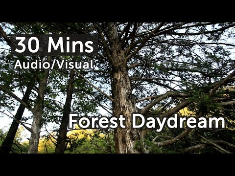 Vision Meditations - Forest Day Dream