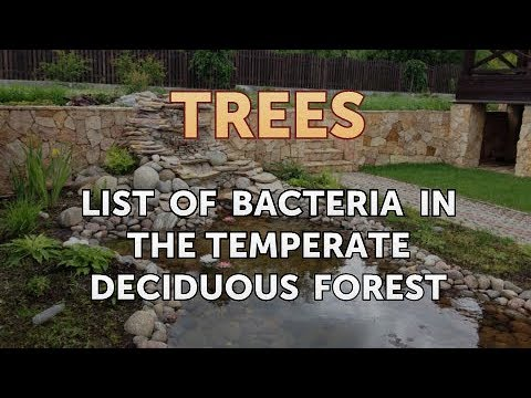 List of Bacteria in the Temperate Deciduous Forest