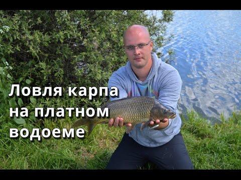 летняя ловля карпа на фидер видео