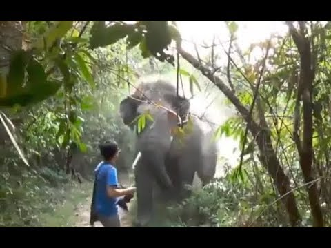 Can You Stop a GIANT Elephant like this? Any guess how he stopped it?