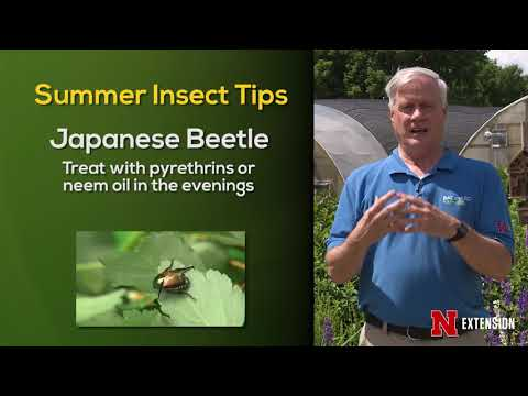 Summer Disease:Insect Tips