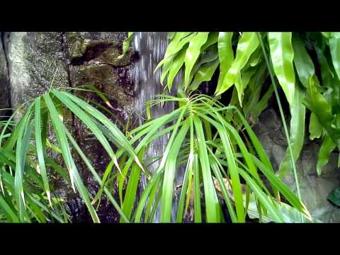 A Waterfall at Franklin Park Conservatory & Botanical Gardens