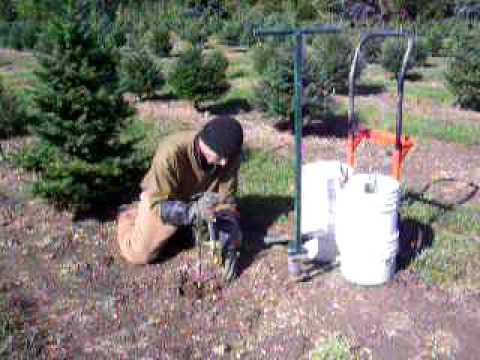 Planting Baby Christmas Trees YouTube - Plant Christmas Trees