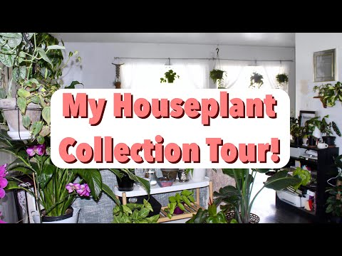 Houseplant Collection Tour! | 300 Indoor Plants Summer 2019