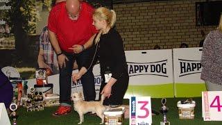 ЛУЧШИЕ ЮНИОРЫ выставки. Породы собак маленького размера. Чемпионат Германии. Выставка в Сконто 2017