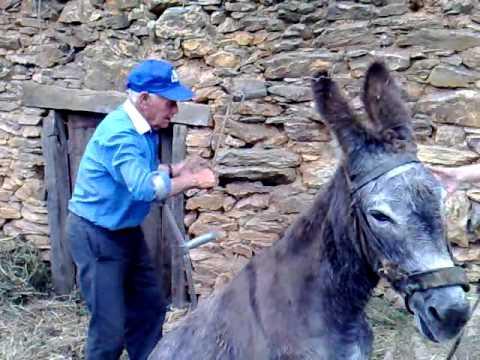 burro pinela