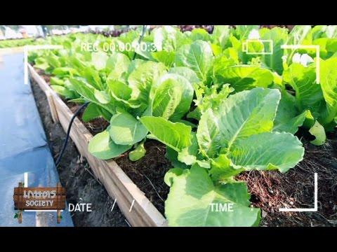 เกษตร Society 8/2/58 : เทคนิคการปลูกสวนผัก