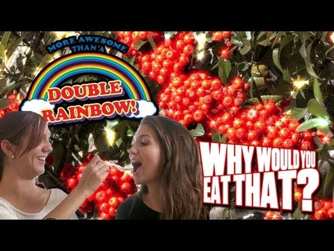 Miracle Berries aka LSD for Your Tongue - Why Would You Eat That?