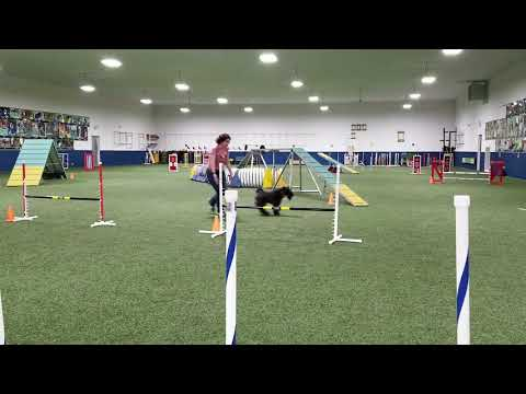 Phenix, Kerry Blue Terrier, Agility class 3-12-2019, 14 obstacles
