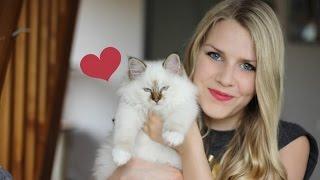 Rencontrez mon nouveau chaton ! ♥