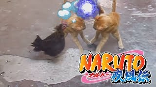 Fight Ninja Cat vs Chicken