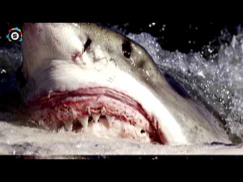 WHEN SHARKS ATTACK ! - 8 Horrific Shark Encounters You Won't Believe!