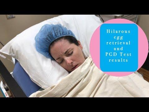 Hilarious Egg Retrieval And PGD Test Results
