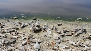 Salton Sea Volg
