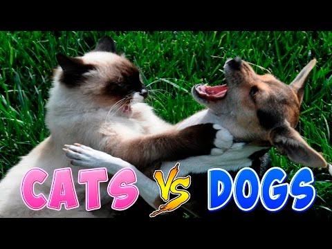 Funny Cats And Dogs Part 2 - Funny Cats vs Dogs - Funny Animals Compilation