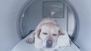 Ouverture nouveau Centre vétérinaire Daubigny à Québec
