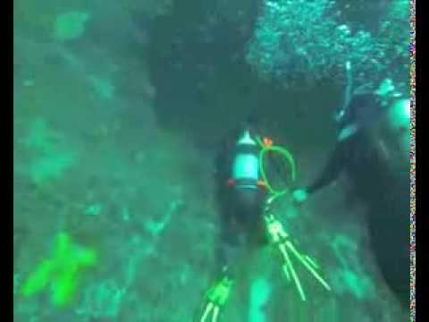 Diving with grey nurse sharks at julian rocks byron bay - Dive byron bay ...