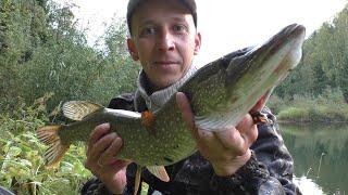 Малая река порадовала Бонусом Рыбалка на спиннинг на Живописной реке Рыбалка для души