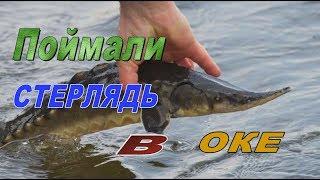 Рыбалка на Оке с Мишаней под Серпуховым #6.