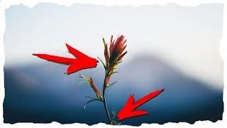 Какие есть части у растения?