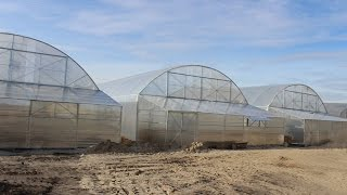 видео: Фермерские промышленные теплицы под пленку для круглогодичного выращивания
