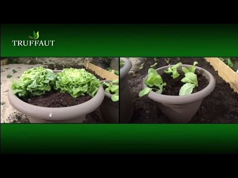 comment planter des salades jardinerie truffaut tv youtube. Black Bedroom Furniture Sets. Home Design Ideas