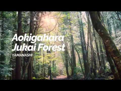 Aokigahara Jukai Forest,Yamanashi | Japan Travel Guide