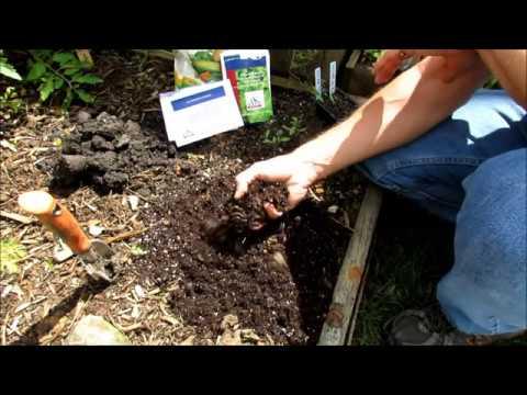 Growing Cherry Tomatoes Start to Finish: Planting, Feeding, Staking, Pruning, Pests & Eating