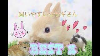 飼いやすいウサギさんBEST3 thumbnail