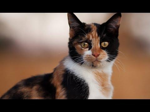 От удара мужчины у кошки отнялись задние лапы, но она все равно доползла к своим деткам...