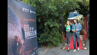 Cape Town premiere of 'Eye of the Pangolin' film - catch all the action from the night