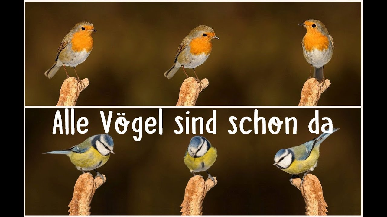 1 alle vögel sind schon da ein vorgelesenes und