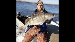 Зимняя рыбалка на судака в Астрахани