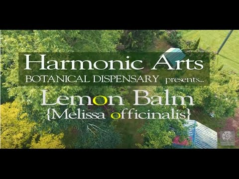 Lemon Balm   Herb Of The Ages   Yarrow And Terry Willard