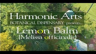 Lemon Balm | Herb of the ages | Yarrow and Terry Willard