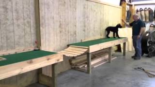 """Giant Schnauzer Puppy Obedience Demo """"peyton"""" For Sale"""