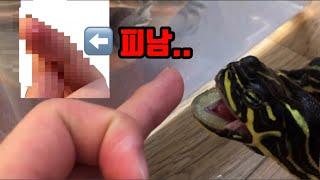 거북이한테 물렸습니다..