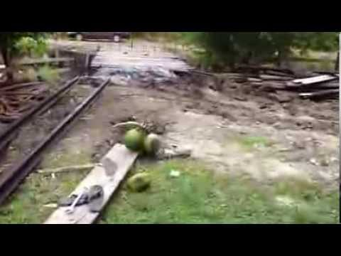 Guyana farm