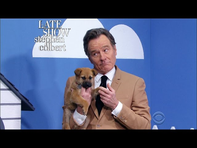 The Late Show 'Rescue Dog Rescue' With Bryan Cranston