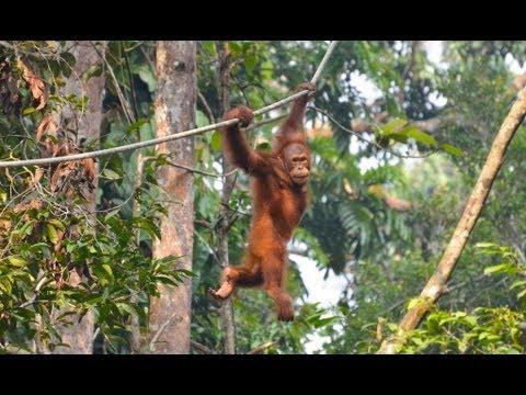 Borneo - Sabah & Sarawak