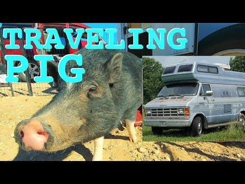 kevin-the-pig,-gogranniejo,-&-trailer-light-install