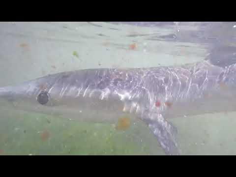 Rescate de un tiburón en Covas
