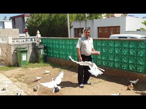 Армянские голуби во Франции голуби Рустама часть первая