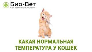 температура кошки