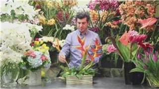 Flower Arrangements : Tropical Fresh Flower Arrangements