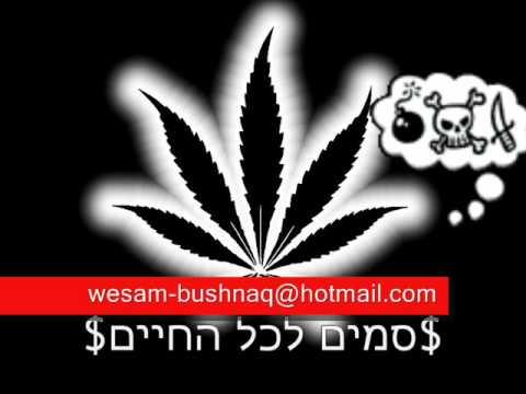 wesam bushnaq
